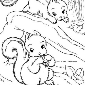 Drawing a squirrel coloring page drawing a squirrel for Coloring page of a squirrel