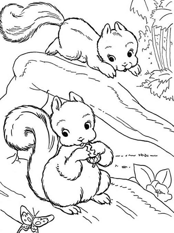 Two baby squirrel coloring page download print online for Coloring page of a squirrel
