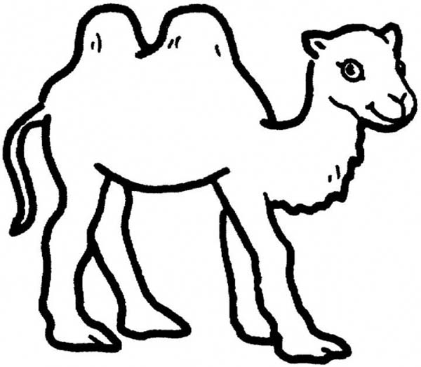 Two Humped Camel Coloring Page Download Print Online Coloring