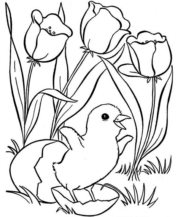 A happy chick on springtime coloring page