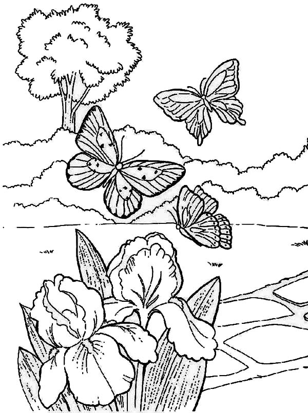 butterfly play near flower on springtime coloring page