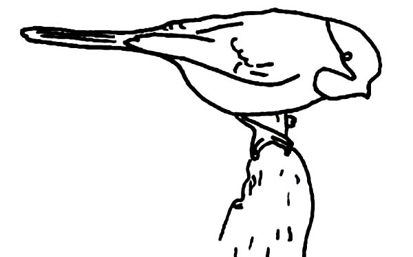 Chickadee Coloring Page for Kids - Download & Print Online Coloring ...