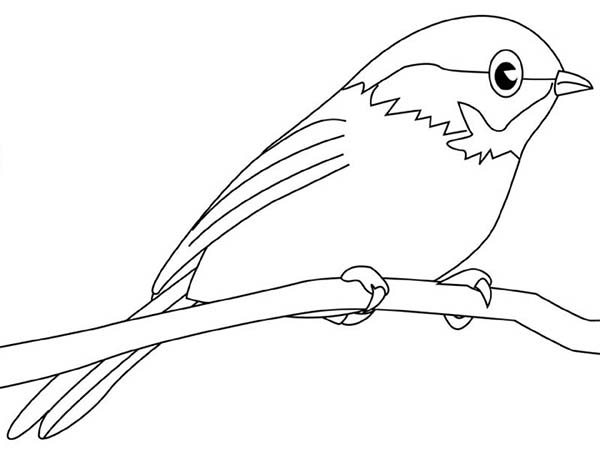 chickadee bird coloring pages - photo#10