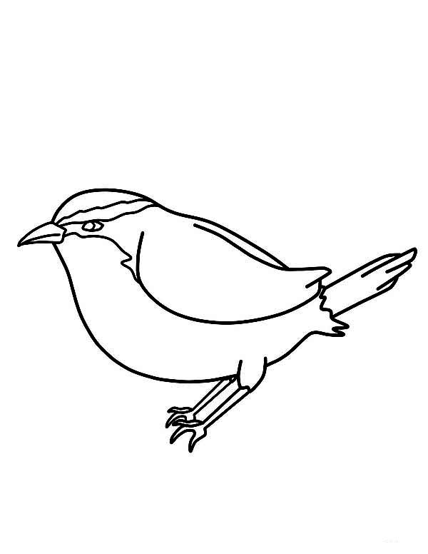 Chickadee Kids Drawing Of Coloring Page