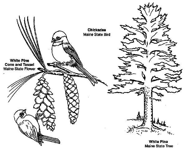 chickadee coloring page - learn about chickadee coloring page download print