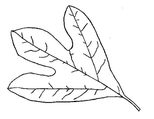 Autumn Leaf Coloring Page Download Print Online Coloring Pages