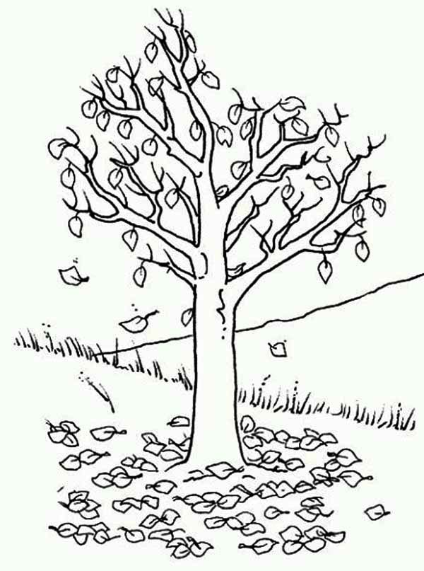 Coloring Page Poems Birches by Robert Frost  Poetry