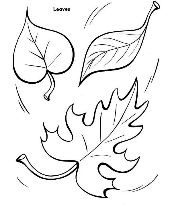 Autumn Leaf to the Ground Coloring Page - Download & Print Online ...