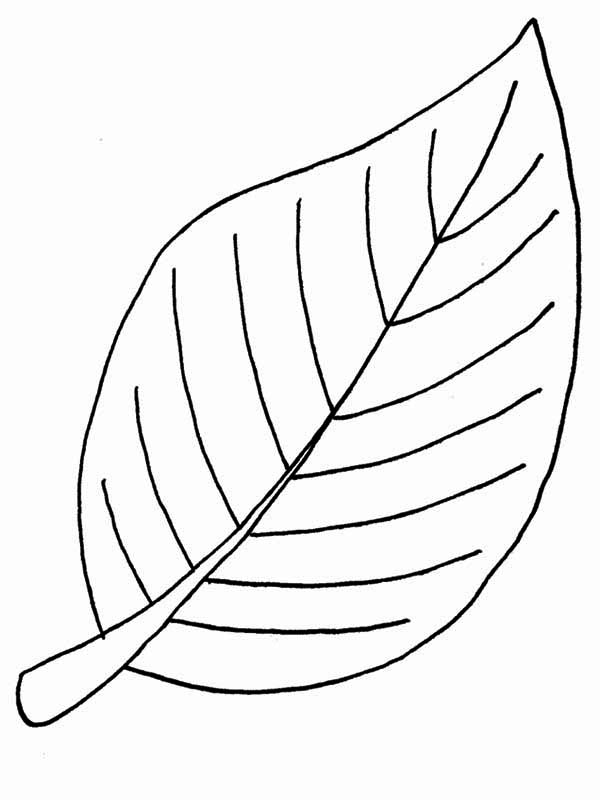 Beech Autumn Leaf Coloring Page Download Amp Print Online