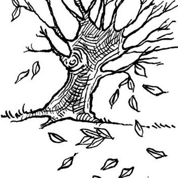 Dogwoods Tree Autumn Leaf Coloring Page