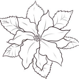 How to Make Poinsettia Flower Sketch Coloring Page