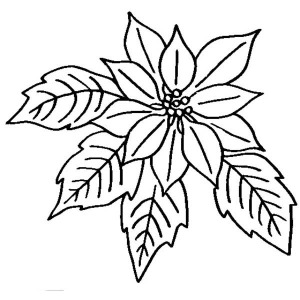 Poinsettia Flower Bloom in December Coloring Page