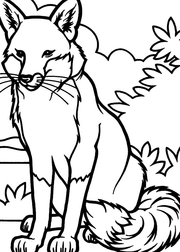 g fox co coloring pages - photo #22