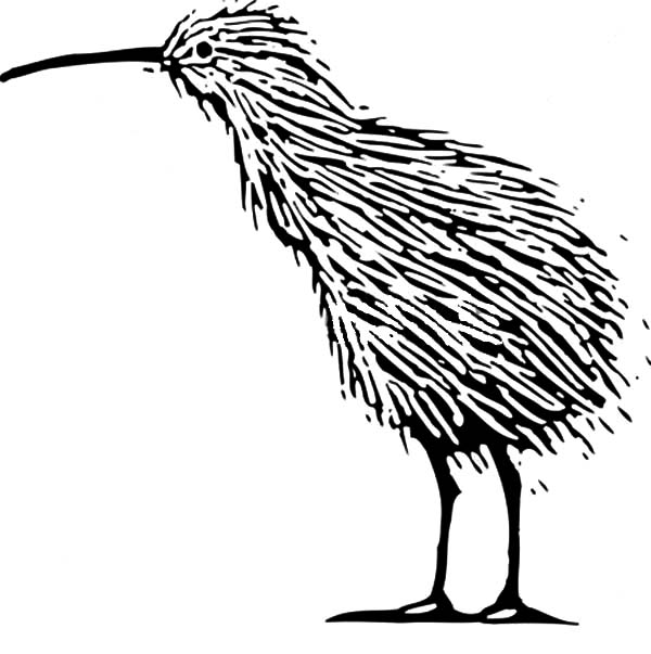 Kiwi birds simple coloring coloring pages for Kiwi bird coloring page