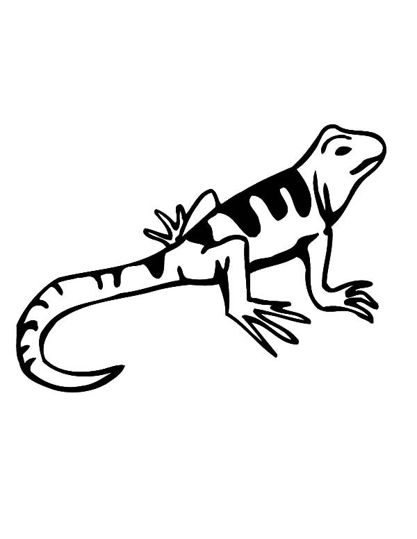 Amazing Animal Lizard Coloring Pages Amazing Animal Lizard
