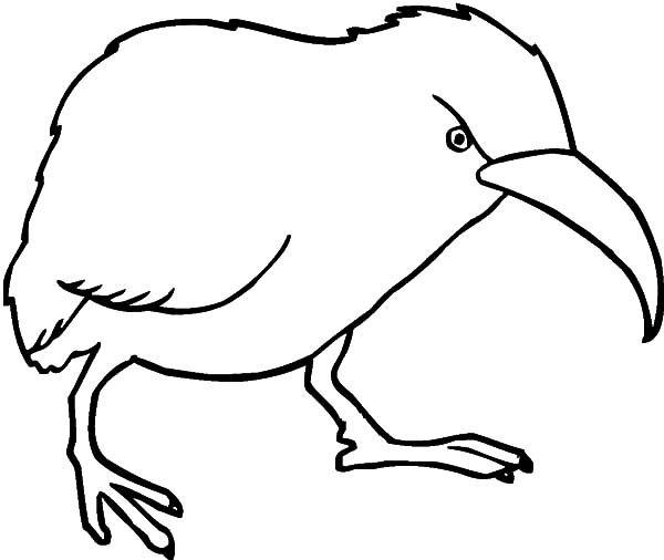 Angry Kiwi Bird Coloring Pages