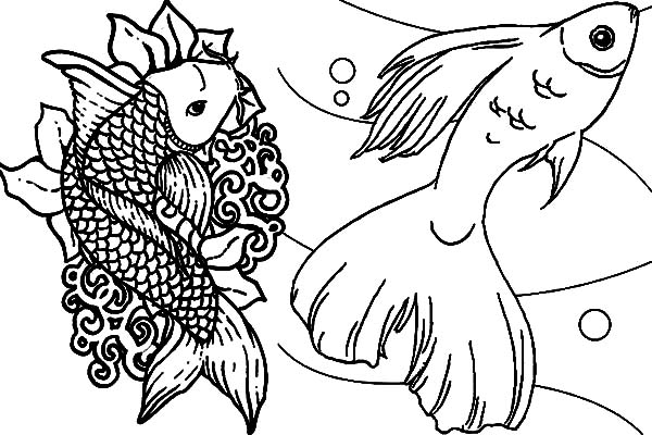 Awesome Animal Koi Fish Coloring Pages