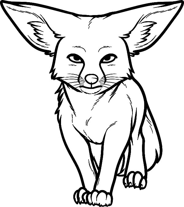 Big Ear Kit Fox Coloring Pages