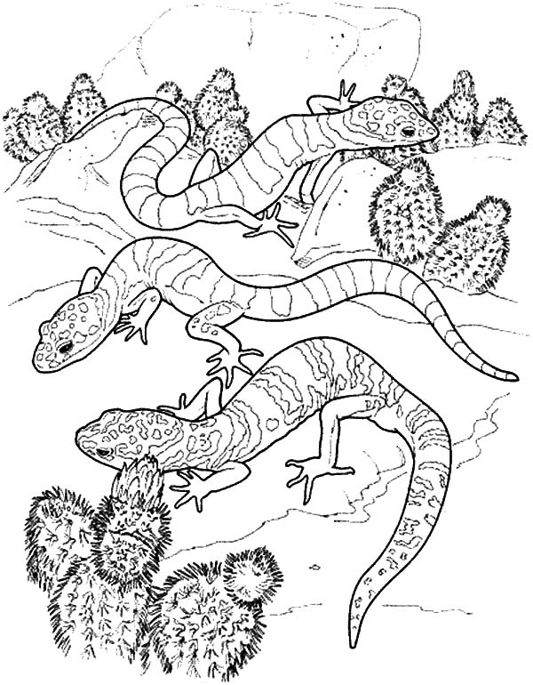 Cactus and Lizard Coloring Pages