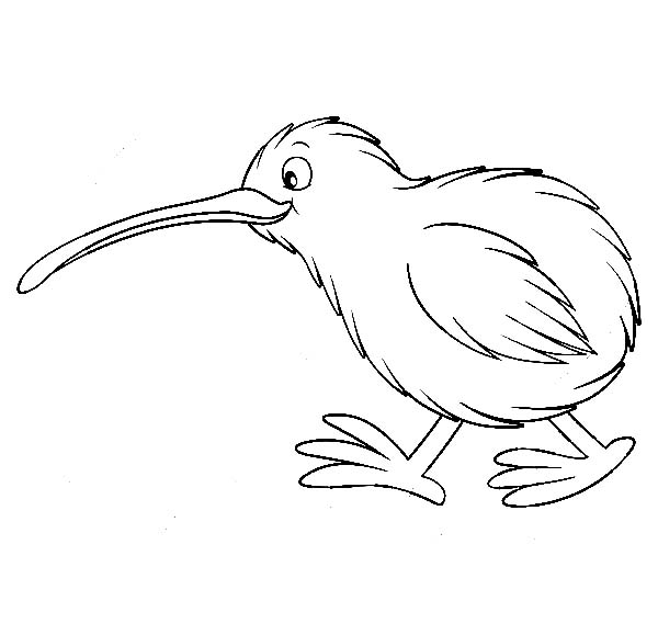Drawing Kiwi Bird Coloring Pages Drawing Kiwi Bird Coloring Pages