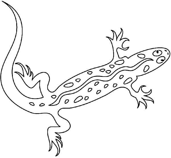 Dangerous Animal Lizard Coloring Pages
