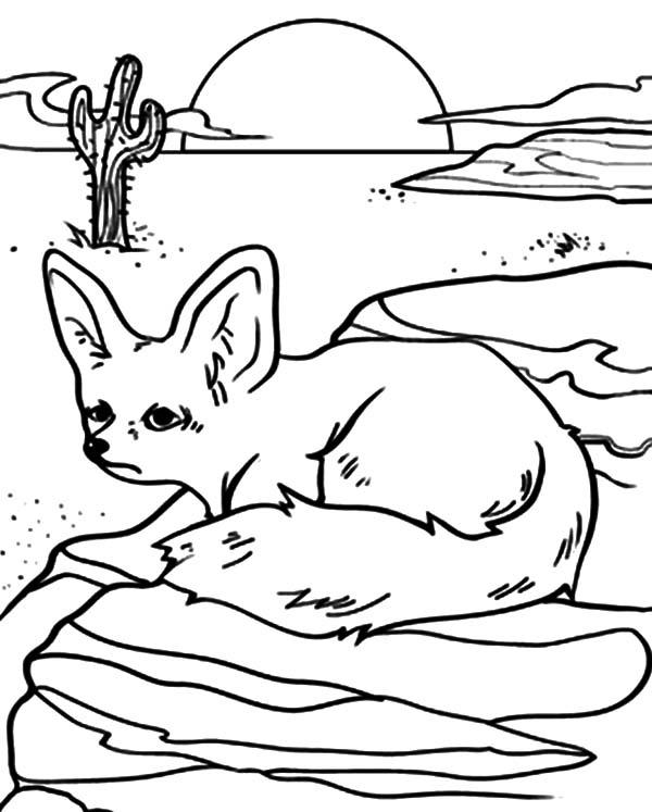 Desert Kit Fox Coloring Pages