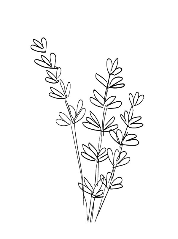 Line Drawing Lavender : Color flower pot coloring page printable kids colouring