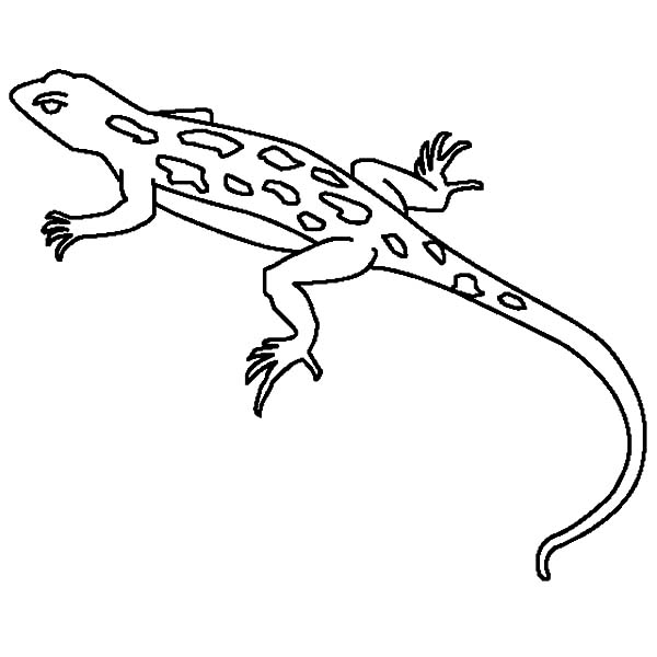 drawing lizard coloring pages