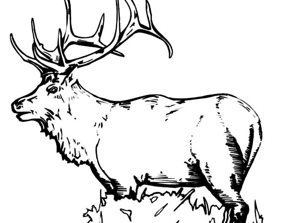Elk Coloring Pages for Kids Download