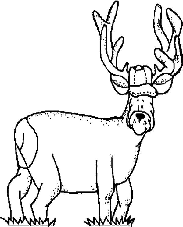 Elk Funny Face Coloring Pages