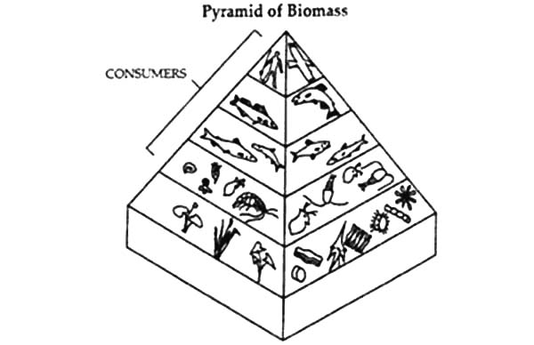 Food Pyramid of Biomass Coloring Pages