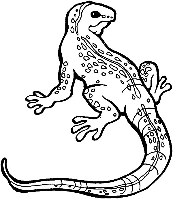 lizard great monitor lizard coloring pages great monitor lizard coloring pagesfull size image