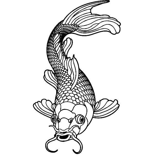 Koi Fish Healthy Male Coloring Pages PagesFull