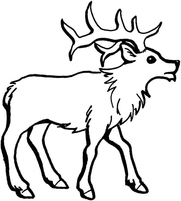 elk how to draw an elk coloring pages