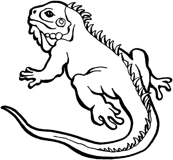 Iguana coloring pages printable coloring pages for Lizard coloring pages
