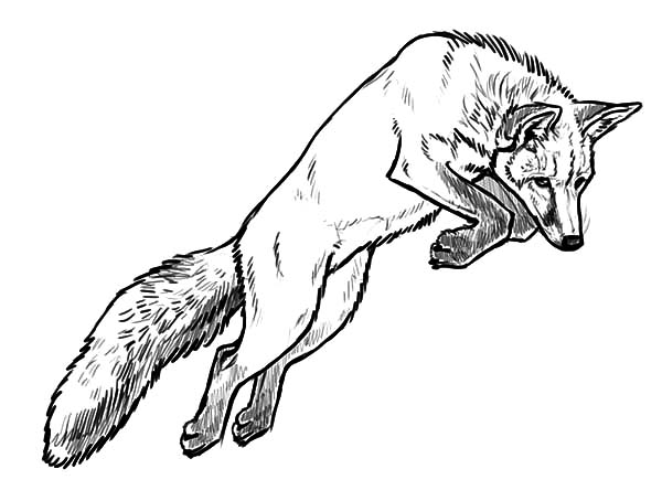 Jumping Kit Fox Coloring Pages