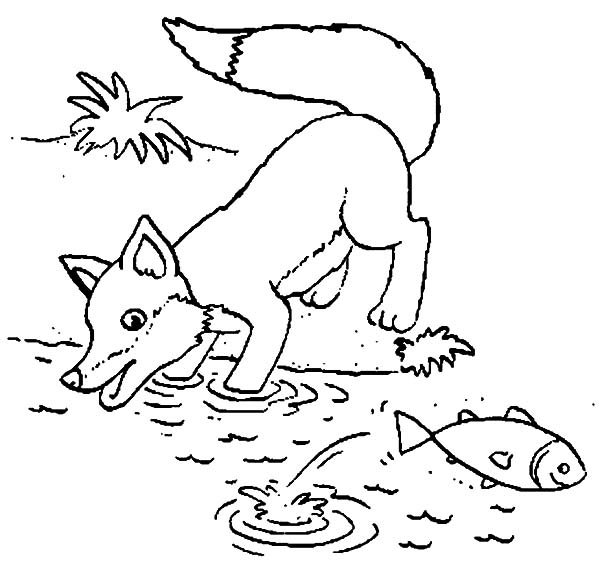 Kit Fox Try to Catch Fish Coloring Pages