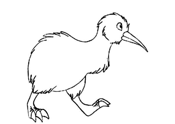 Kiwi Bird Walking Aroung Coloring Pages