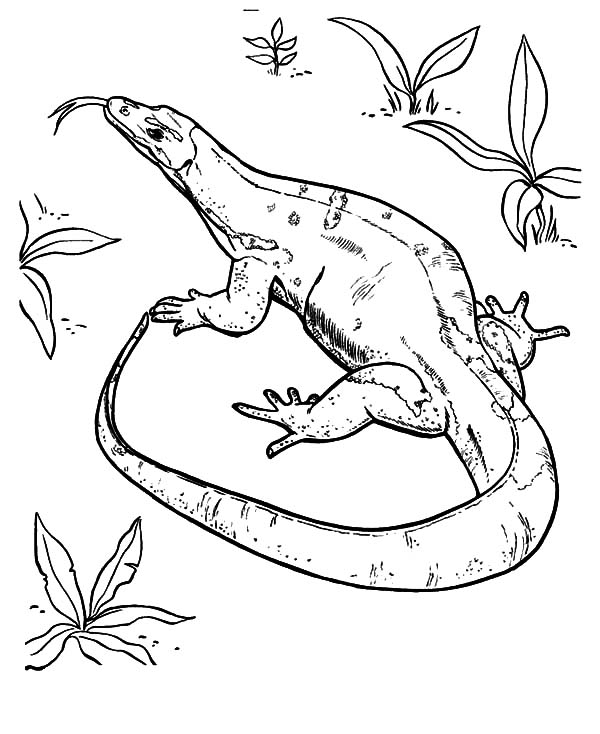 amazing baby dragon coloring pages - photo#13