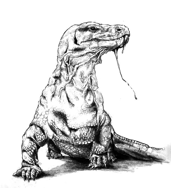 Komodo Dragon Poisonous Saliva Coloring Pages