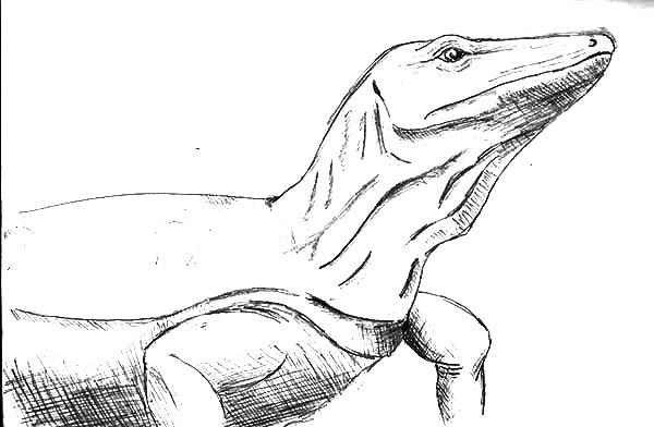 Komodo Dragon Sketch Coloring Pages