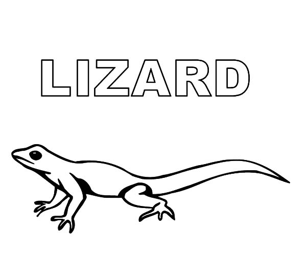 Lizard coloring pages for kids download print online for Gecko lizard coloring pages