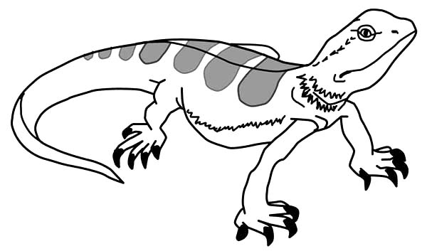 Lizard Picture Coloring Pages: Lizard Picture Coloring Pages ...