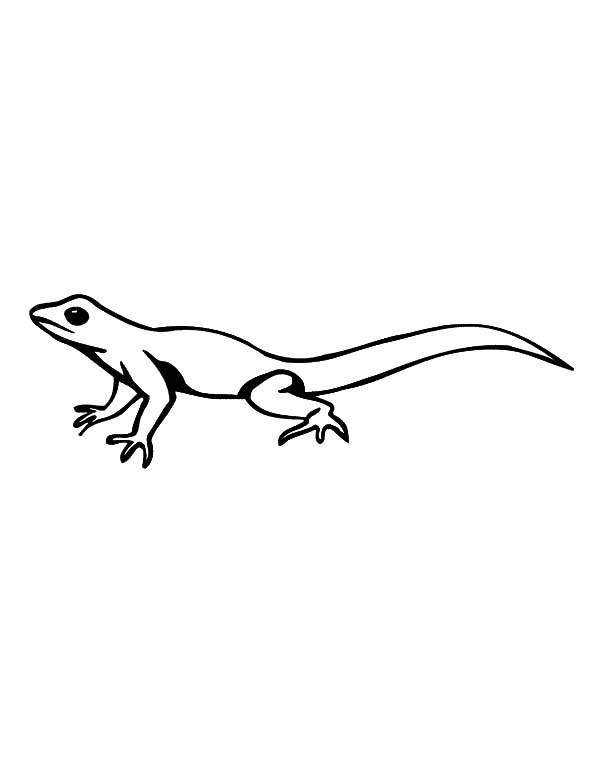 Lizard Running Fast Coloring Pages