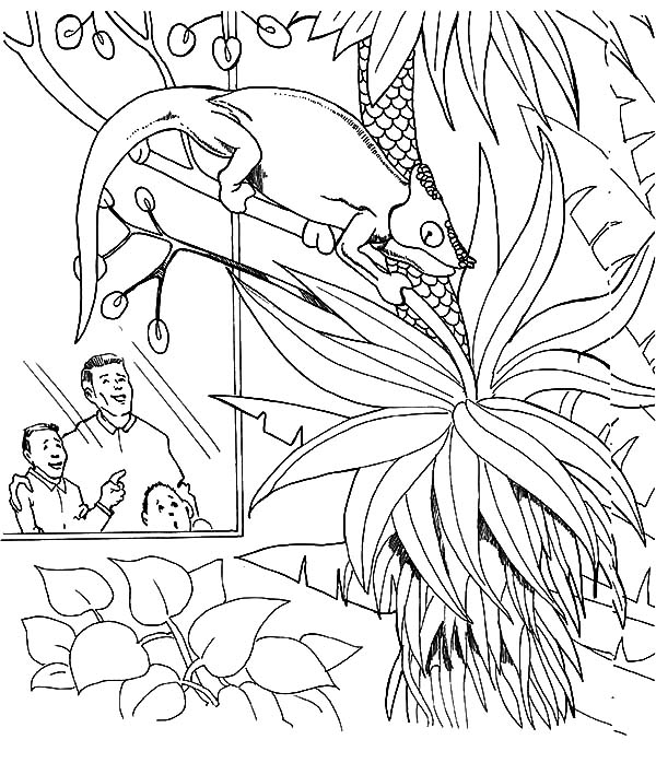 Lizard in the Zoo Coloring Pages