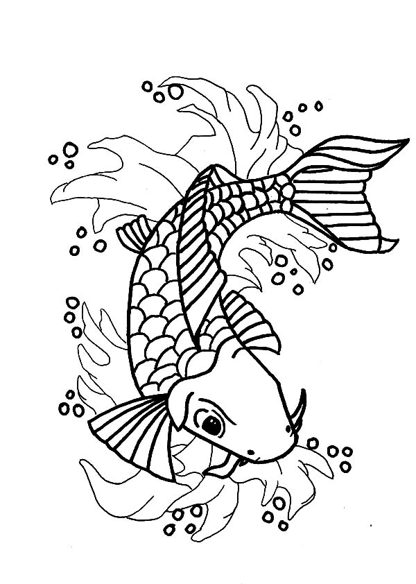 Nishikigoi Koi Fish Coloring Pages Download Print