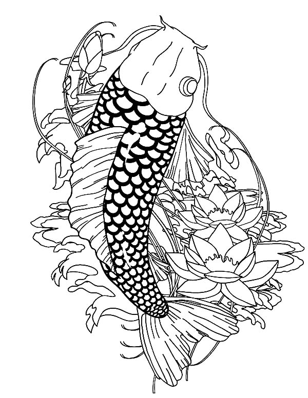 Paradise Koi Fish Coloring Pages Paradise Koi Fish Coloring Pages