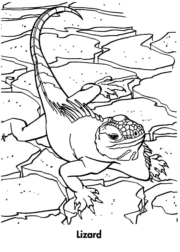 Planet Earth Animal Lizard Coloring Pages
