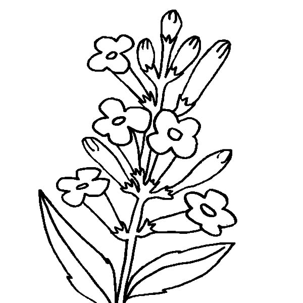 Flower Picture Coloring Page - Download & Print Online Coloring ...