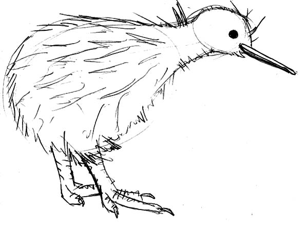 Cute kiwi bird sheets coloring pages for Kiwi bird coloring page